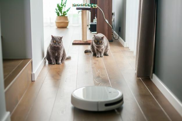 Zwei graue britische katzen beobachten die arbeit des roboterstaubsaugers