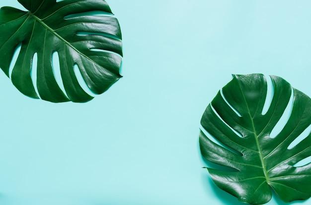 Zwei grüne monstera tropische blätter rahmen auf hellem cyanblauem hintergrund ein. leerer platz für kopie, text, schriftzug.