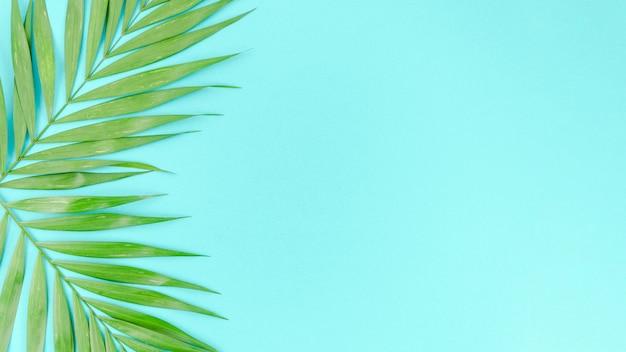 Zwei grüne palmblätter auf tabelle