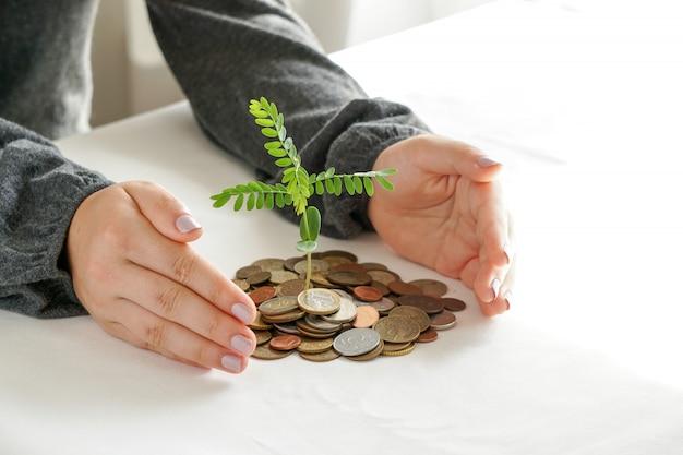 Zwei hände, die bäume auf einen haufen geld pflanzen.