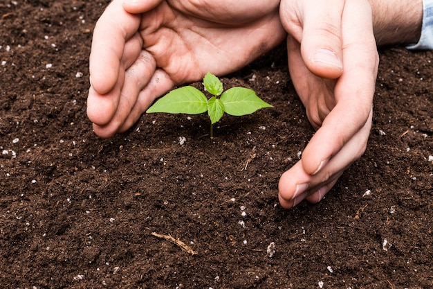 Zwei hände, die eine junge grünpflanze halten und sich interessieren