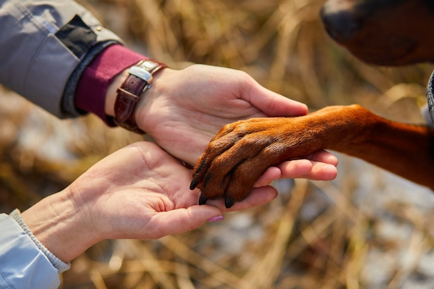 Zwei hände familie und hundepfote