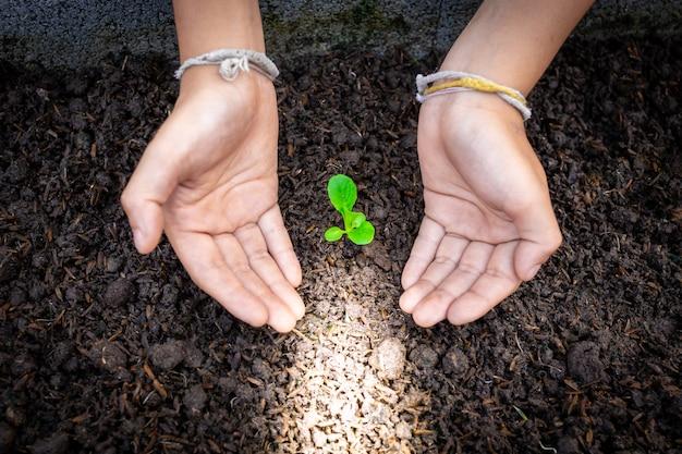 Zwei hände kümmern sich um grünen sämling
