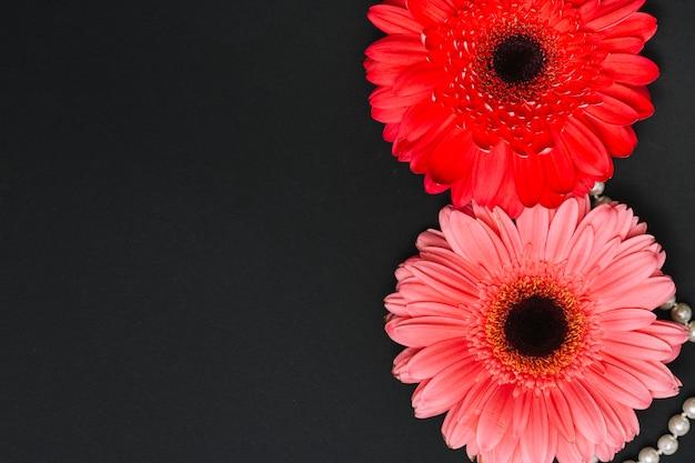 Zwei helle gerberablumen auf dunkler tabelle