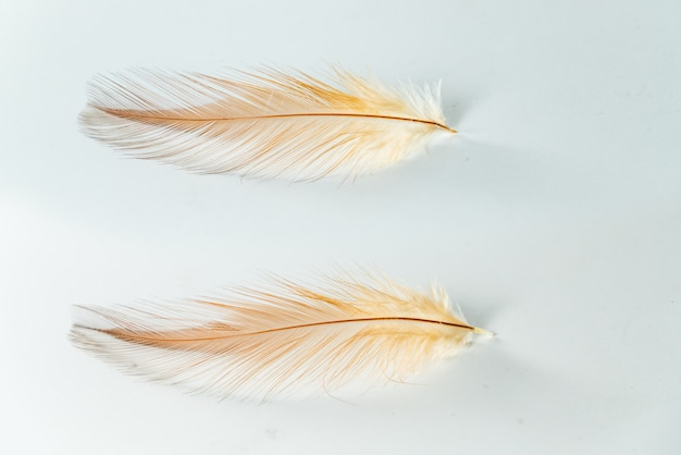Zwei hühnerfedern