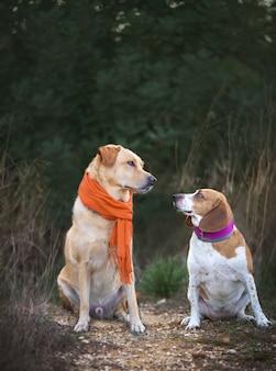 Zwei hunde, die sich im winter mit einem schal ansehen.