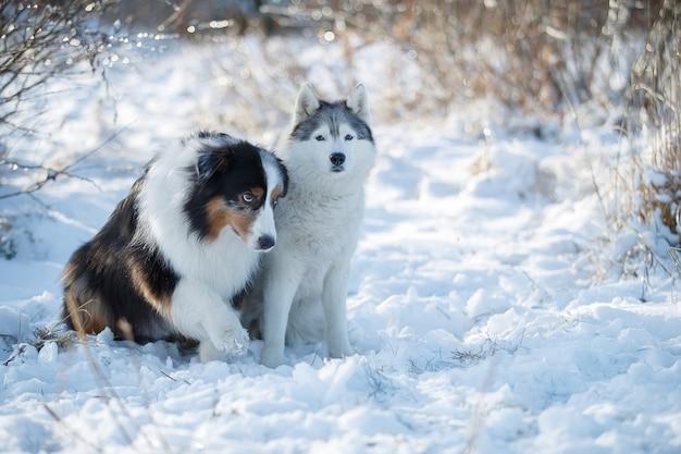 Zwei hunde sitzen im schnee