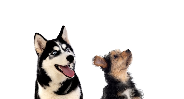 Zwei hunde unterschiedlicher größe, die nach oben schauen