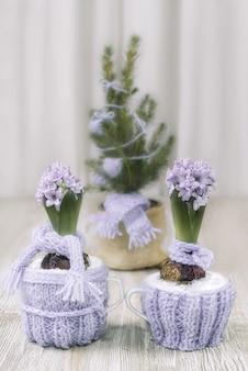 Zwei hyazinthen, warm angezogen für den winter