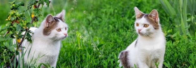 Zwei junge weiß gefleckte katzen im garten auf dem grünen gras