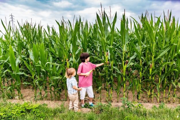 Zwei jungen, die auf einem feld bleiben und mais pflücken. ein kleiner bauer im sommer