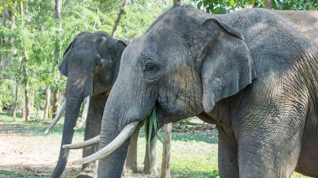Zwei junger elefant, der ihr lebensmittel isst