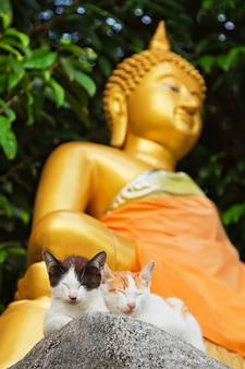 Zwei kätzchen und buddha