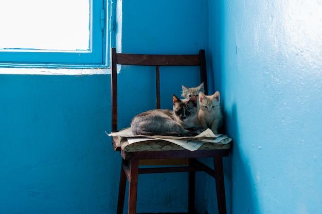 Zwei kätzchen und mutterkatze auf einem lügenstuhl