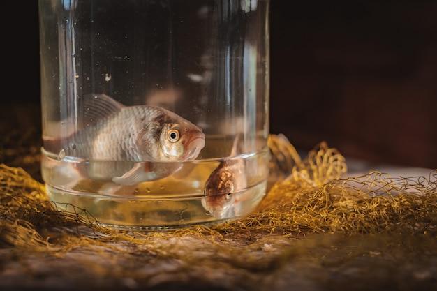 Zwei karpfenfische in einem glas auf dem tisch mit einem fischernetz.