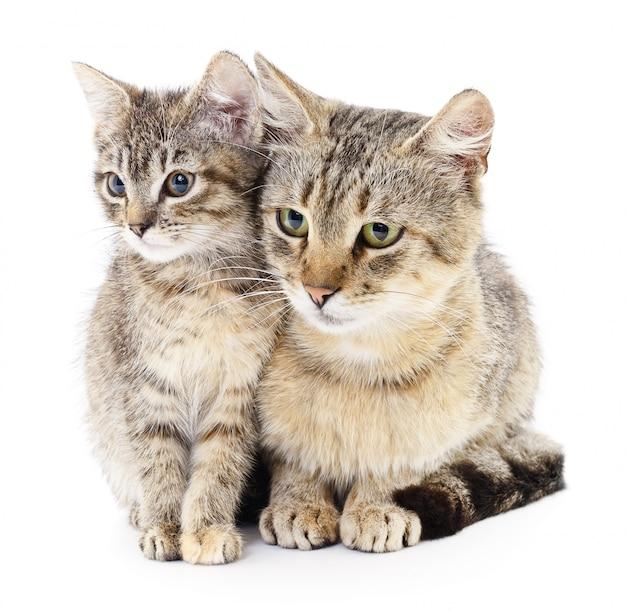 Zwei katze