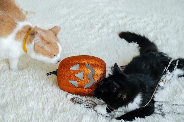 Zwei katzen, die mit halloween-dekorationen spielen