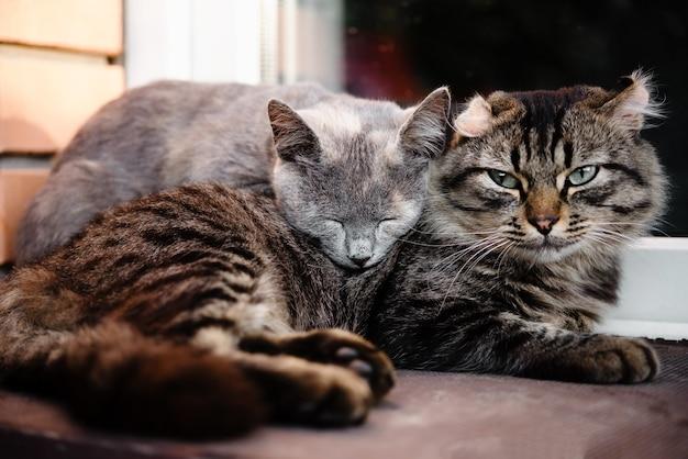 Zwei katzen, die sich aneinander lehnen, als freunde katzenfreundschaft