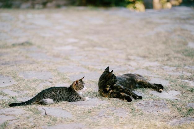 Zwei katzen ruhen auf dem asphalt