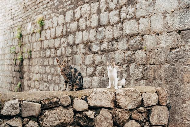 Zwei katzen sitzen auf einem steinzaun
