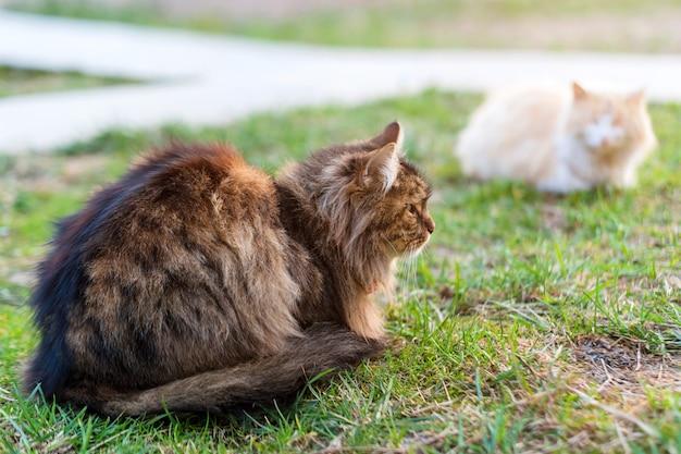 Zwei katzen sitzen auf grünem gras. streunende katzen im freien. tiere, haustiere im park