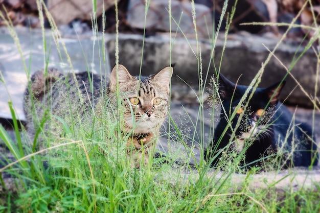 Zwei katzen sitzen im gras