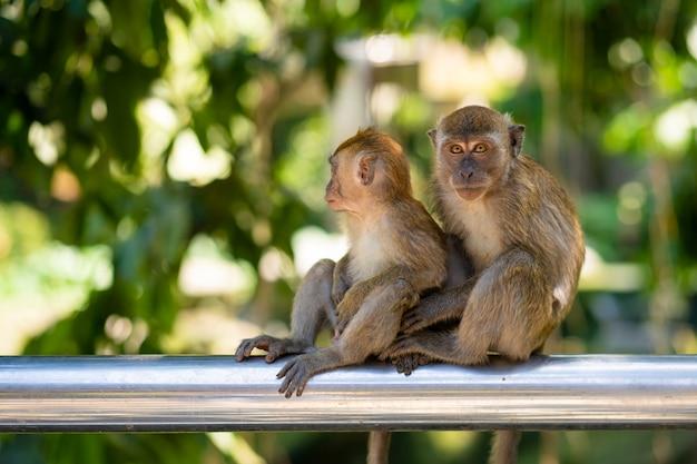 Zwei kleine affen umarmen sich, während sie auf einem zaun sitzen