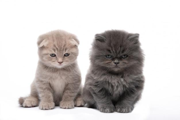 Zwei kleine kätzchen auf einem weißen isoliert