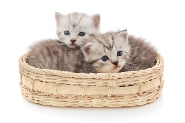Zwei kleine kätzchen sitzen in einem korb