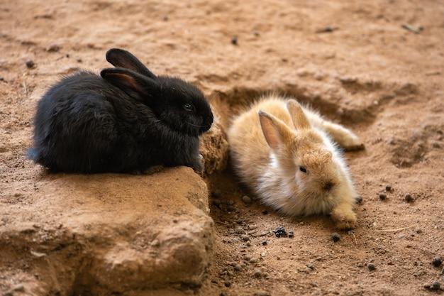 Zwei kleine kaninchen oder hasen oder hasen, die auf dem boden ruhen