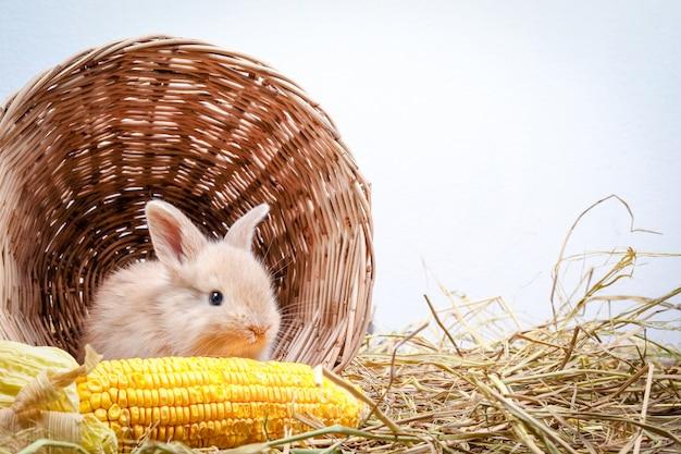 Zwei kleine kaninchen versteckten sich in einem hölzernen korb und aßen mais wie eine begeisterung.