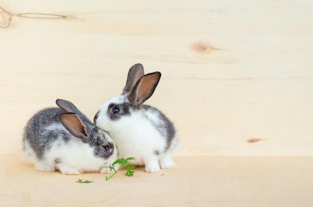 Zwei kleine kaninchenbabys, häschen, die salatblätter und karotten essen. futter für nagetiere, haustier. fröhliches osterkonzept.