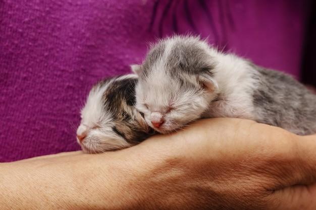 Zwei kleine neugeborene kätzchen in den händen einer frau
