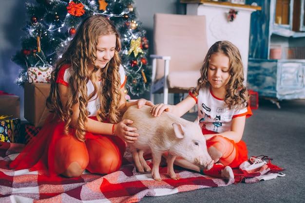 Zwei kleine schwestern spielen mit einem minischwein nahe einem weihnachtsbaum mit geschenken.