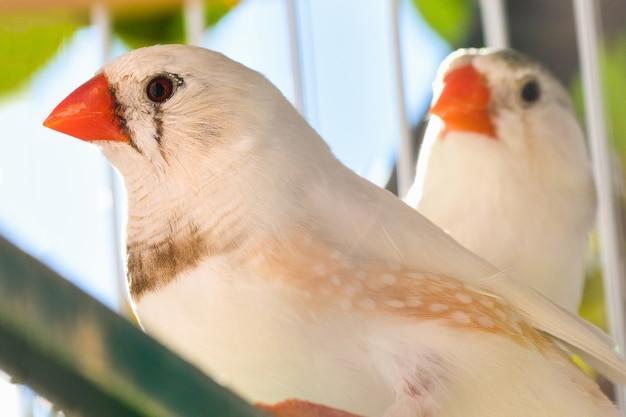 Zwei kleine singvögel sind im käfig