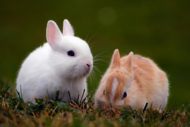 Zwei kleine süße hasen sind im gras