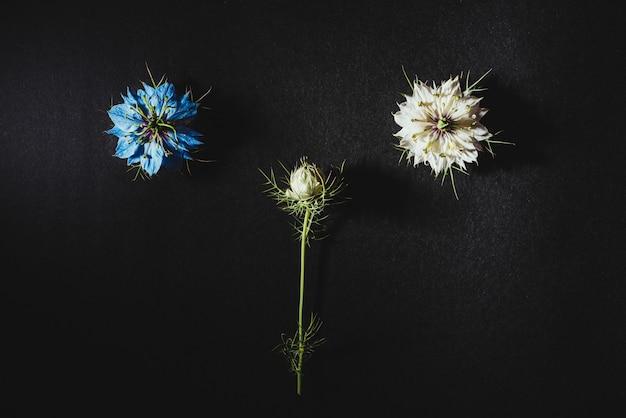 Zwei kleine weiße und lila blüten auf einem schwarzen tisch in einer symmetrischen natürlichen zusammensetzung angeordnet
