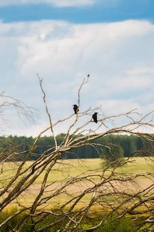 Zwei krähen auf den zweigen eines alten baumes
