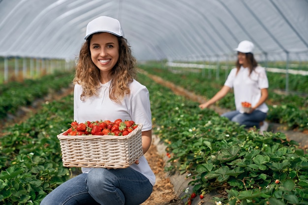 Zwei lächelnde frauen ernten erdbeeren