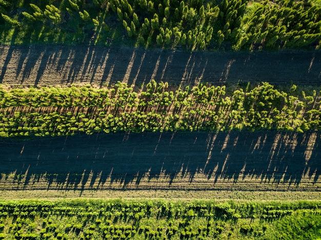 Zwei landstraßen in verschiedene richtungen zum fahren eines landwirtschaftlichen autos im wald, foto von drohne