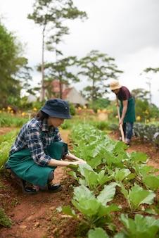 Zwei landwirte, die anlagen im obstgarten kultivieren
