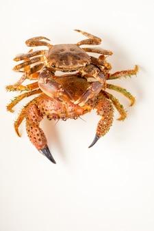 Zwei mediterrane krabben