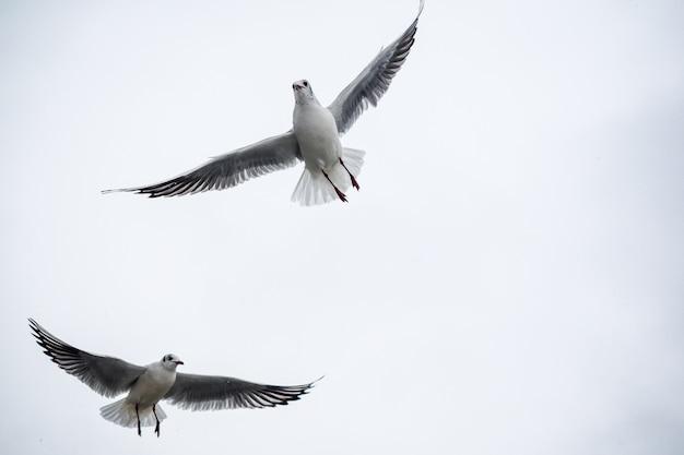 Zwei möwen fliegen über den see.