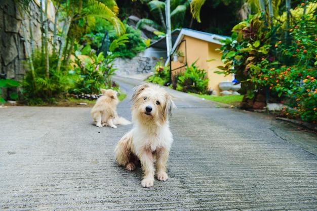 Zwei nasse hunde in tropischer insel nach regen
