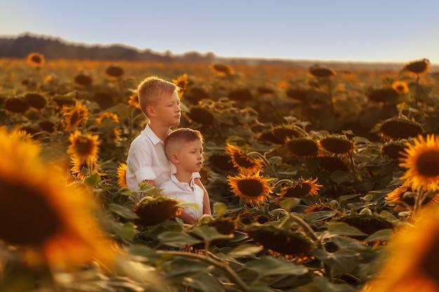Zwei nette geschwisterjungen, die spaßsonnenblumenfeld umarmen und haben.