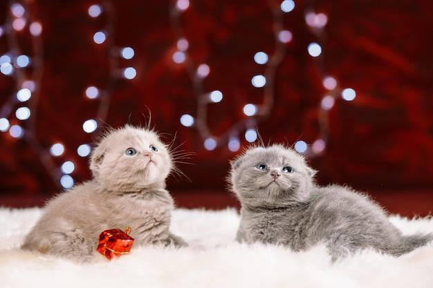 Zwei nette kätzchen, die auf dem weißen pelz sitzen