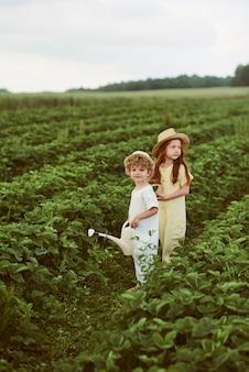 Zwei niedliche kinderjungen und -mädchen, die erdbeeren auf dem feld ernten und spaß haben