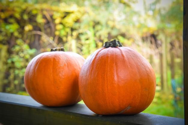Zwei orange kürbisse auf herbst fot halloween hintergrund