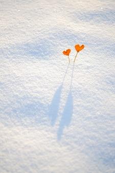 Zwei orange tangerineherzen der weinlese auf stöcken auf weißem schnee