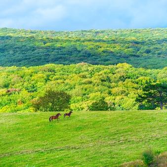 Zwei pferde auf der grünen wiese unter blauem himmel